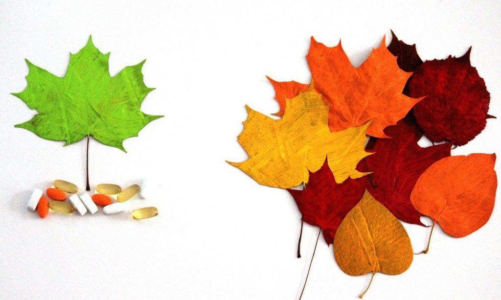 leaves, fresh, green